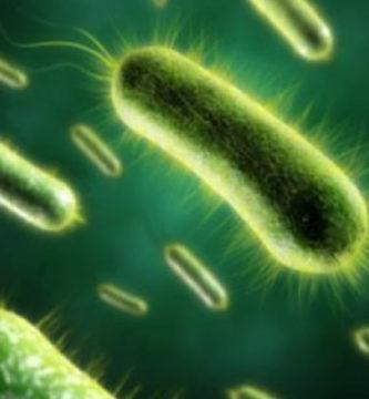 superbacterias mycoplasma genitalium